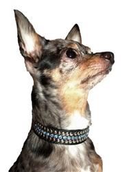 Blue Winston Collars & Leads