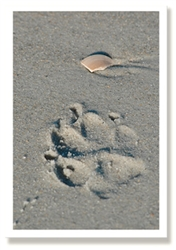 Sympathy -  Paw Prints...(6 pack)
