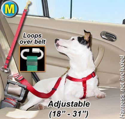 Seatbelt Tether