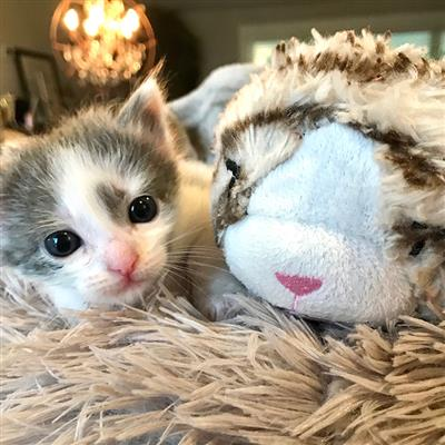 Snuggle Kitty Behavior Aid Toy - Tan Tiger