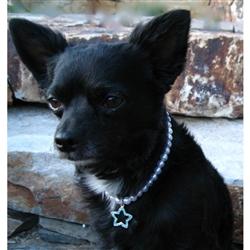 Pet Decorative Jewelry - Necklace - Star