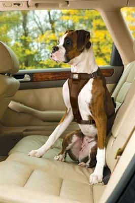 Tru-Fit Smart Harness - Quick Release w/seatbelt loop