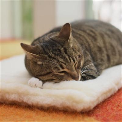 Kitty Cat Cuddle Mat