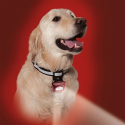 Red PupLight2™ Safety Flashlight Collar