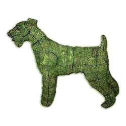 Mossed Topiary - Airedale