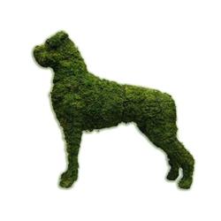 Topiary - Boxer