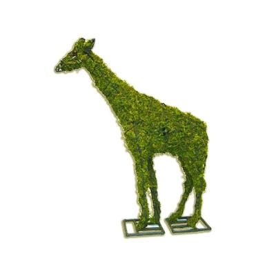 Topiary - Giraffe (Mossed)