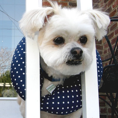 Puppy Bumpers - Navy Dot