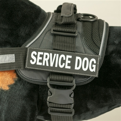 EzyDog Convert Harness Custom Side Badges