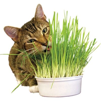 Snack 'n Treat Easy Grow Oat Grass Kit