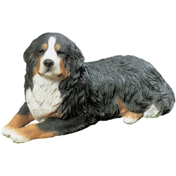 Sandicast Mid Size Bernese Mountain Dog