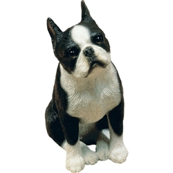 Sandicast Mid Size Boston Terrier
