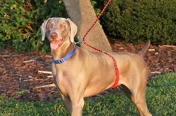 Paws Aboard Monster Walker Dog Leash - 3 COLOR OPTIONS**
