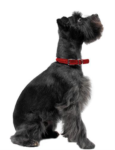 Dogline Soft Leather Round Collar