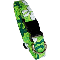 Pacific Green Beach Dog Collars and Leashes