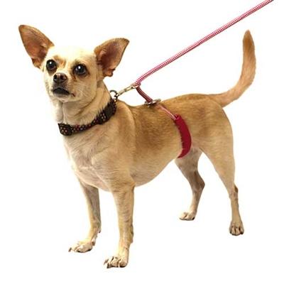 The Mini Monster Walker Dog Leash