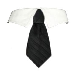 David Shirt Collar