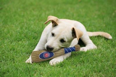 Chicago Cubs Plush Bat