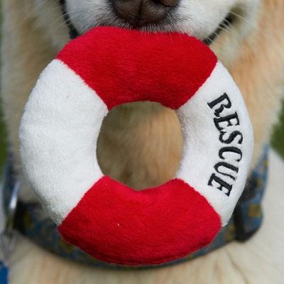 Rescue Toys