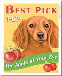 Best Pick Pup (Dachshund)