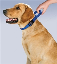 Martingale Collar with Quick Snap Buckle