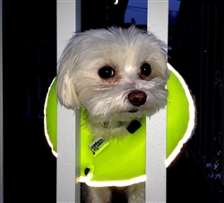 Glow Pups Safety Yellow Reflective Puppy Bumpers