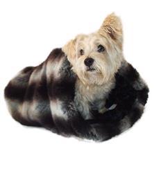 Cozy, Luxe Chinchilla