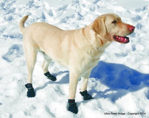 Snow & Go Boots