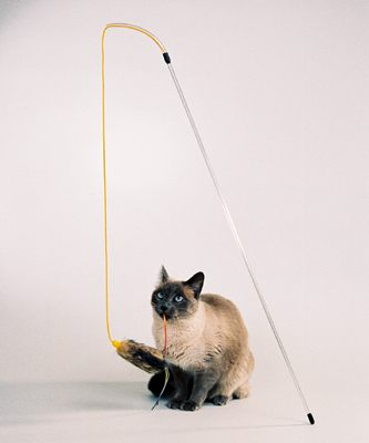 The PURRfect® Cat Toy