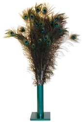 "Natural Peacock Feathers™ (35-40"")"
