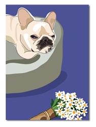 Birthday: Frency W/ Daisies