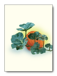 Pumpkin Single Notes (6 cards/pk)