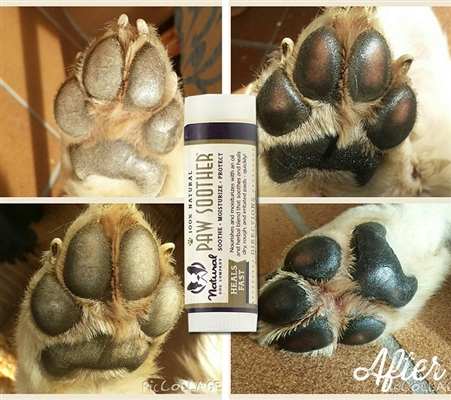 Paw Soother Trial - .15 oz Travel Stick