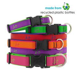 """LupinePet® 1"""" Club EZ pack, 6 pieces collars and leashes"""