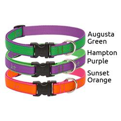 "LupinePet® 3/4"" Club EZ pack, 6 pieces collars and leashes"
