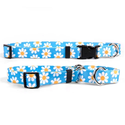 Blue Daisy Collection