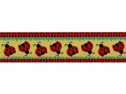 "Doodlebug - 3/4"" Collars, Leashes and Harnesses"