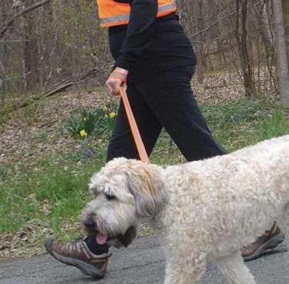 Reflective Dog Leads