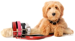 Manhattan Patent Leather Leashes