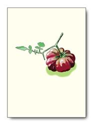 Tomatos Single Notes (6 cards/pk)