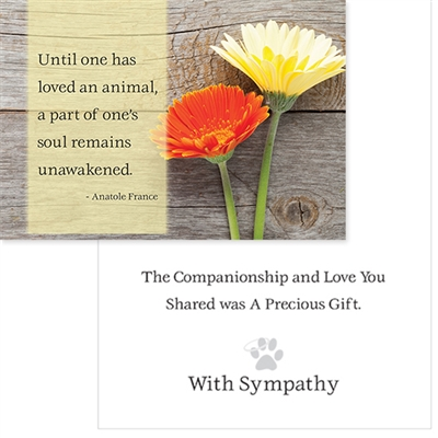 Sympathy -  Until one has loved an animal, (6 pack)
