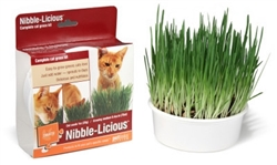 Nibble-Licious Cat Grass Kit by Petlinks