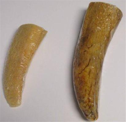 Water Buffalo Horn Core Medium Dog Chew Treat