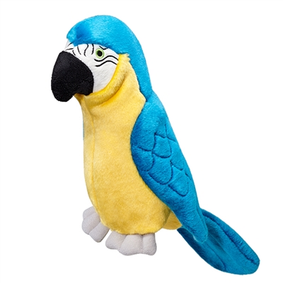 Jimmy the Parrot