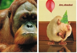 Pet Themed Belated Birthday Greeting Cards