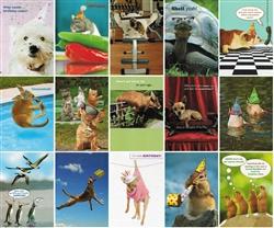 Pet Themed Birthday Greeting Cards
