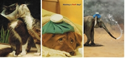 Pet Themed Get Well Greeting Cards