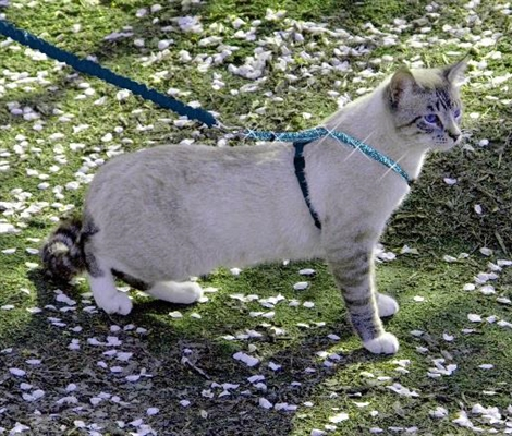 Come with Me Kitty™ Glitter Harness & Bungee Leash