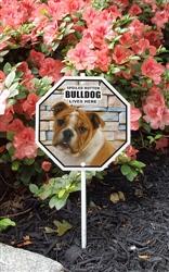 "Spoiled Rotten Bulldog Lives Here Garden Sign 8"" x 8"""