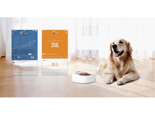 Smart Activity Monitoring Pet Tracker